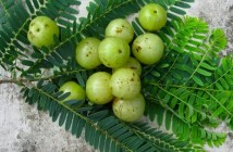 Zdroj: www.herbal-ayurveda-remedy.com